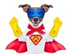 Dog dressed as super hero